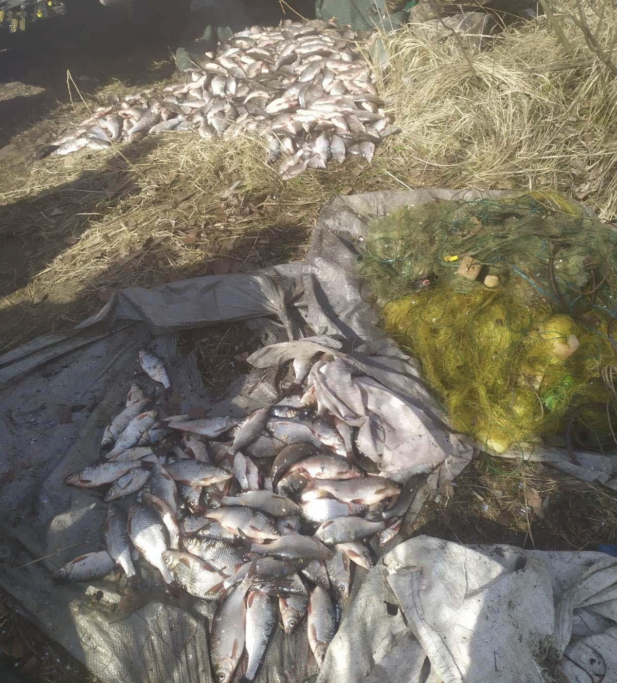 Без Купюр На Кіровоградщині поліцейські викрили місцевих жителів у незаконному вилові риби Кримінал  Світловодськ риба новини Кіровоградщина 2021 Квітень