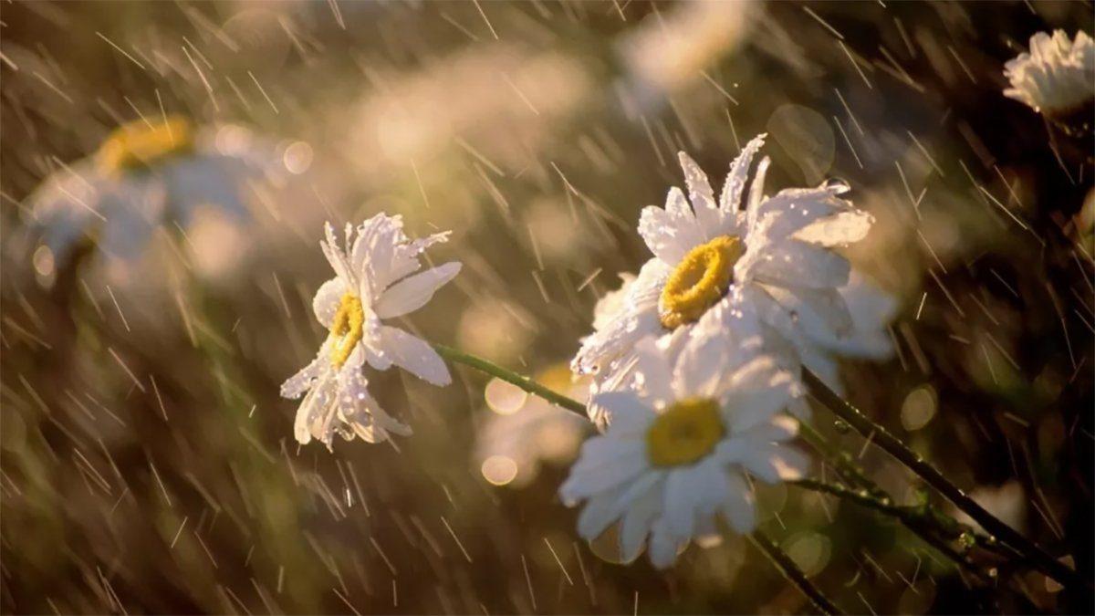 Без Купюр На травневі свята погода у Кропивницькому буде похмурою, але помірно теплою Життя  погода новини Кропивницький Кіровоградщина 2021 Квітень