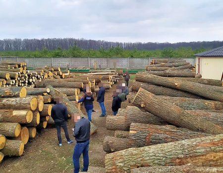 У Знам'янці чоловік вирубав лісу на 61 тисячу гривень