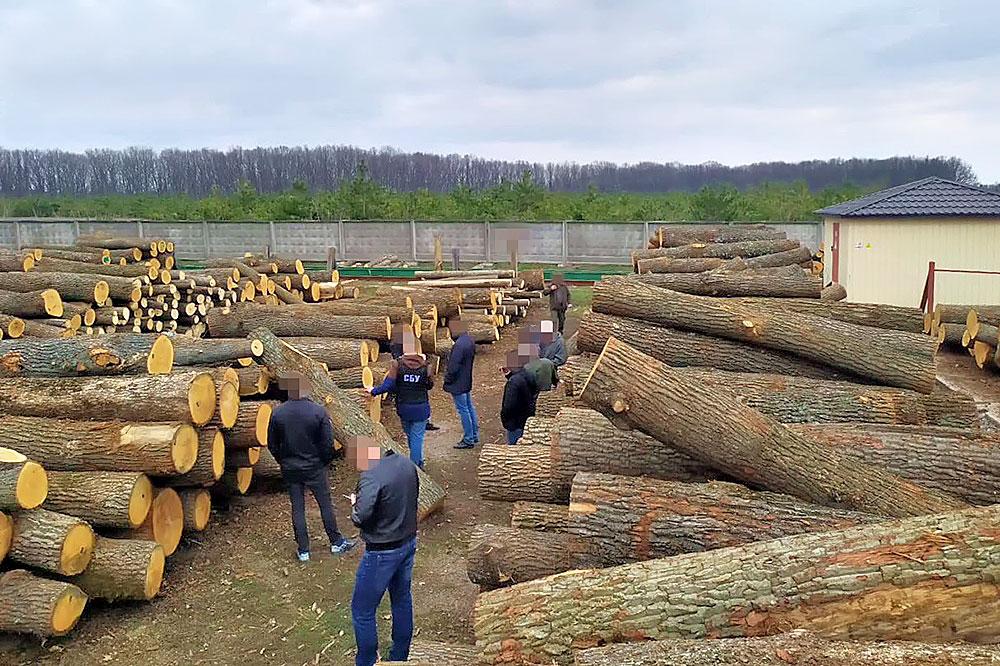 Без Купюр В Управлінні лісового господарства відкидають звинувачення СБУ в контрабанді Кримінал  СБУ новини Кіровоградщина деревина 2021 Квітень