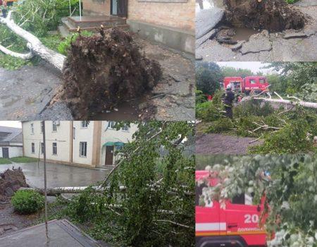 На Кіровоградщині буревій повиривав дерева з корінням. ФОТО