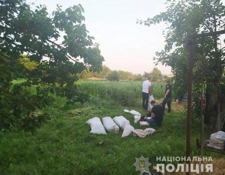 На Кіровоградщині поліцейські знищили плантацію маку і конопель. ФОТО