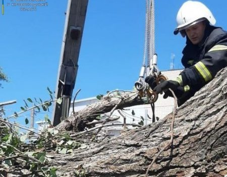 За добу в Кропивницькому прибрали 6 повалених та пошкоджених дерев