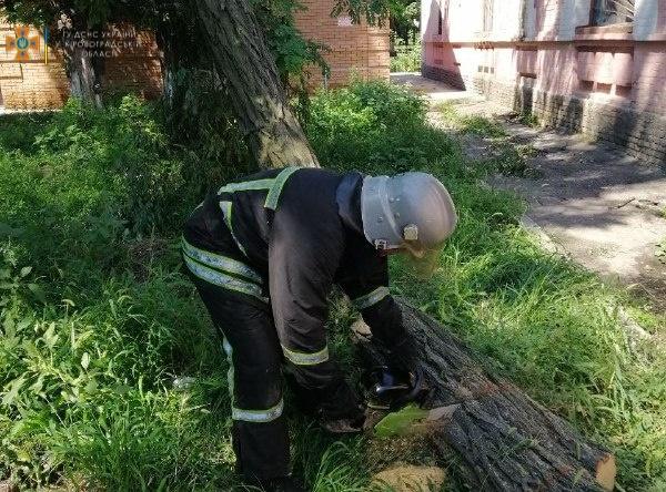 Без Купюр За добу в Кропивницькому прибрали 6 повалених та пошкоджених дерев Життя  новини Кропивницький Кіровоградщина дерева 2021 рік