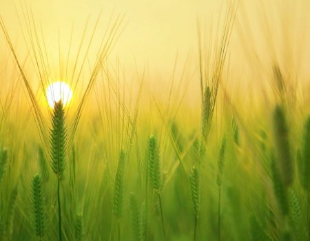 Фермери, які втратили врожай через погодні умови, отримають компенсацію від держави