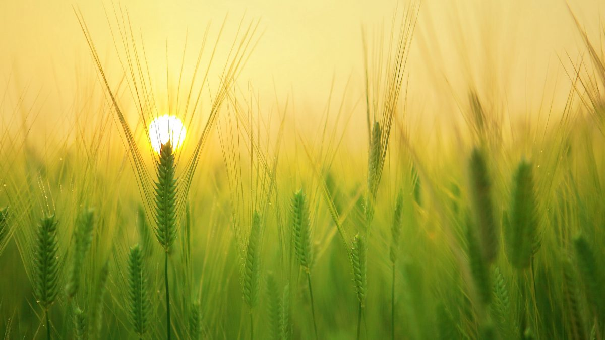 Без Купюр Фермери, які втратили врожай через погодні умови, отримають компенсацію від держави Бізнес Україна сьогодні  сільське господарство новини Кіровоградщина 2021 рік